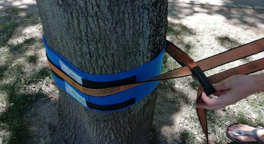 Die orange Wing um den Baum legen