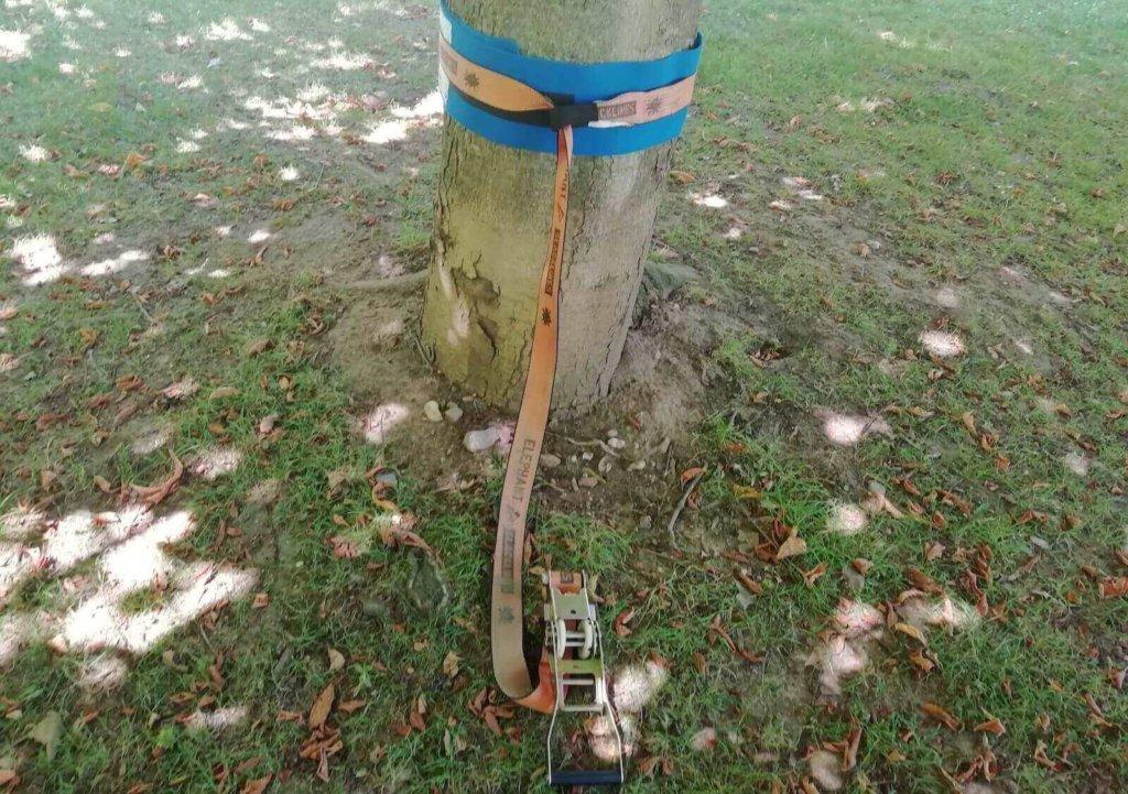 Die Ratsche am Baum befestigen