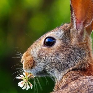 Slackline zu Ostern als Geschenk für die ganze Familie